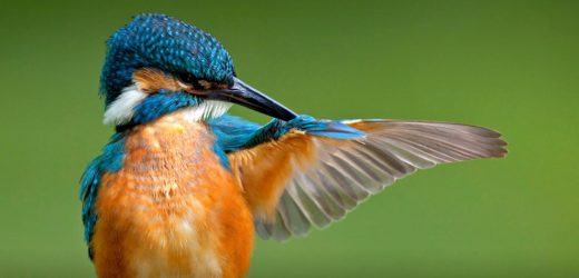Pathiramanal is the land for Kingfisher!