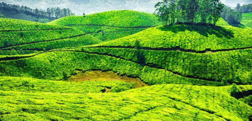 Looking for hotels in Munnar, Kerala ?