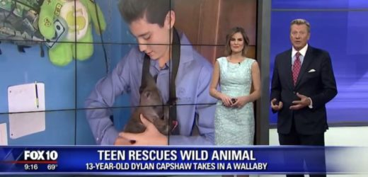 Ending The Dog Meat Trade: An Interview With Wildlife Activist Dylan Capshaw  A Scottsdale Teen Is On A Mission To Save Wildlife Animals.
