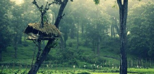 Meesapulimala is one of the top honeymoon destinations in South India.