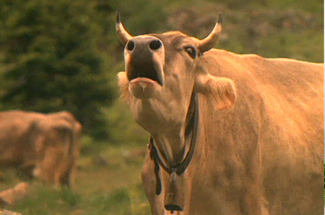 Two killed in UP over 'cow theft'
