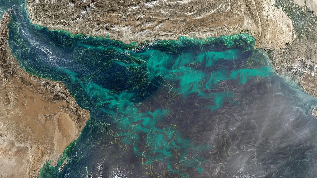World's largest marine dead zone will reach UAE's shores soon.