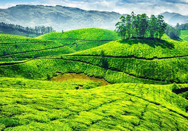 Looking for hotels in Munnar, Kerala ?
