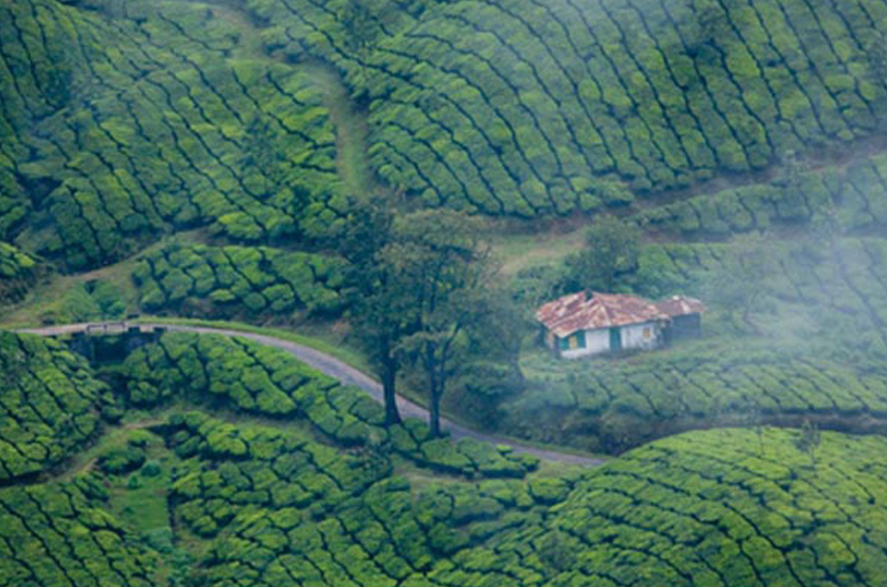 Munnar hill station and tea plantations one another attraction in India